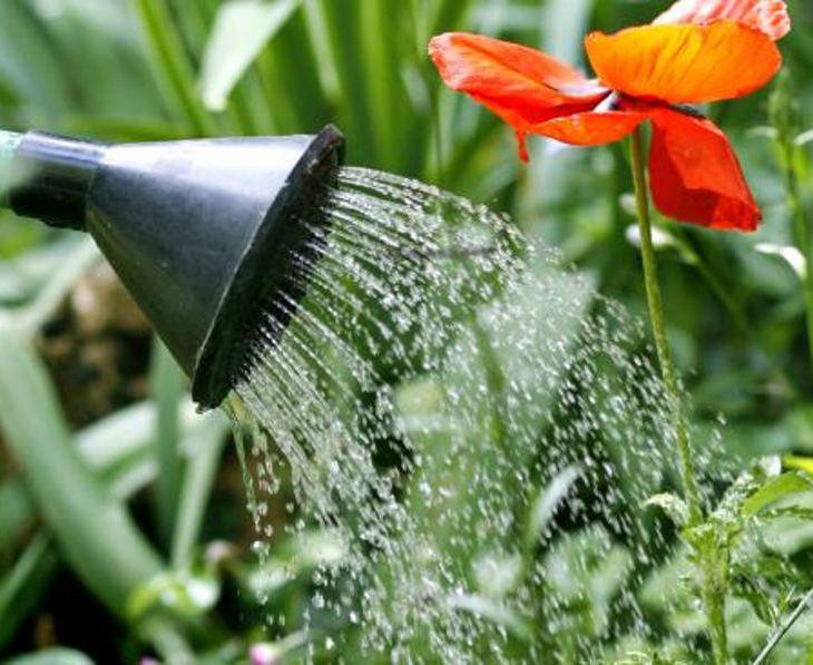 jardiner bon pour le moral et anti stress